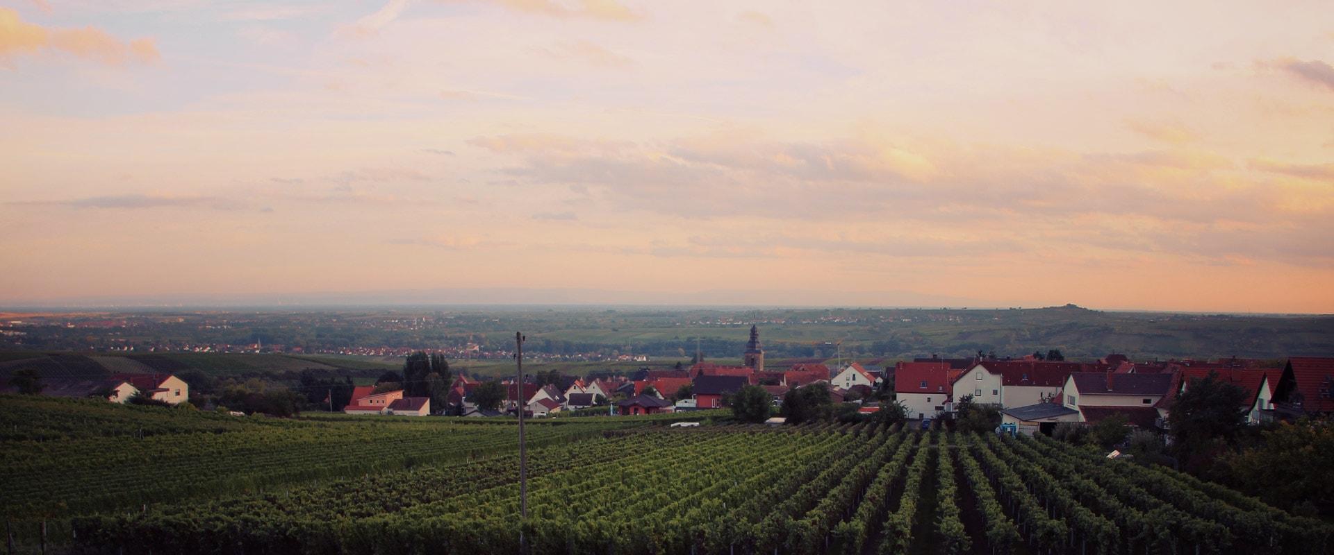 Weingut Lidy Weinreben Frankweiler Sonnenuntergang